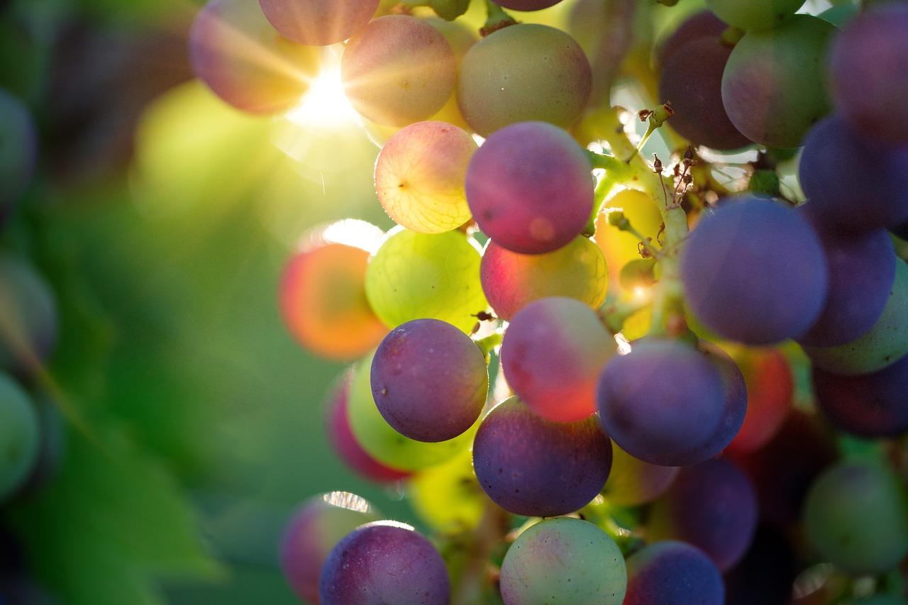 Grape Frappe