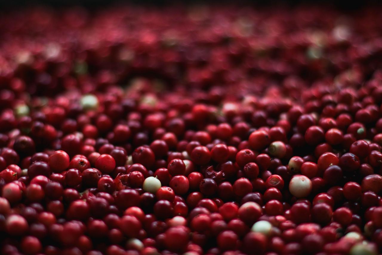 Thanksgiving Cranberry Dessert