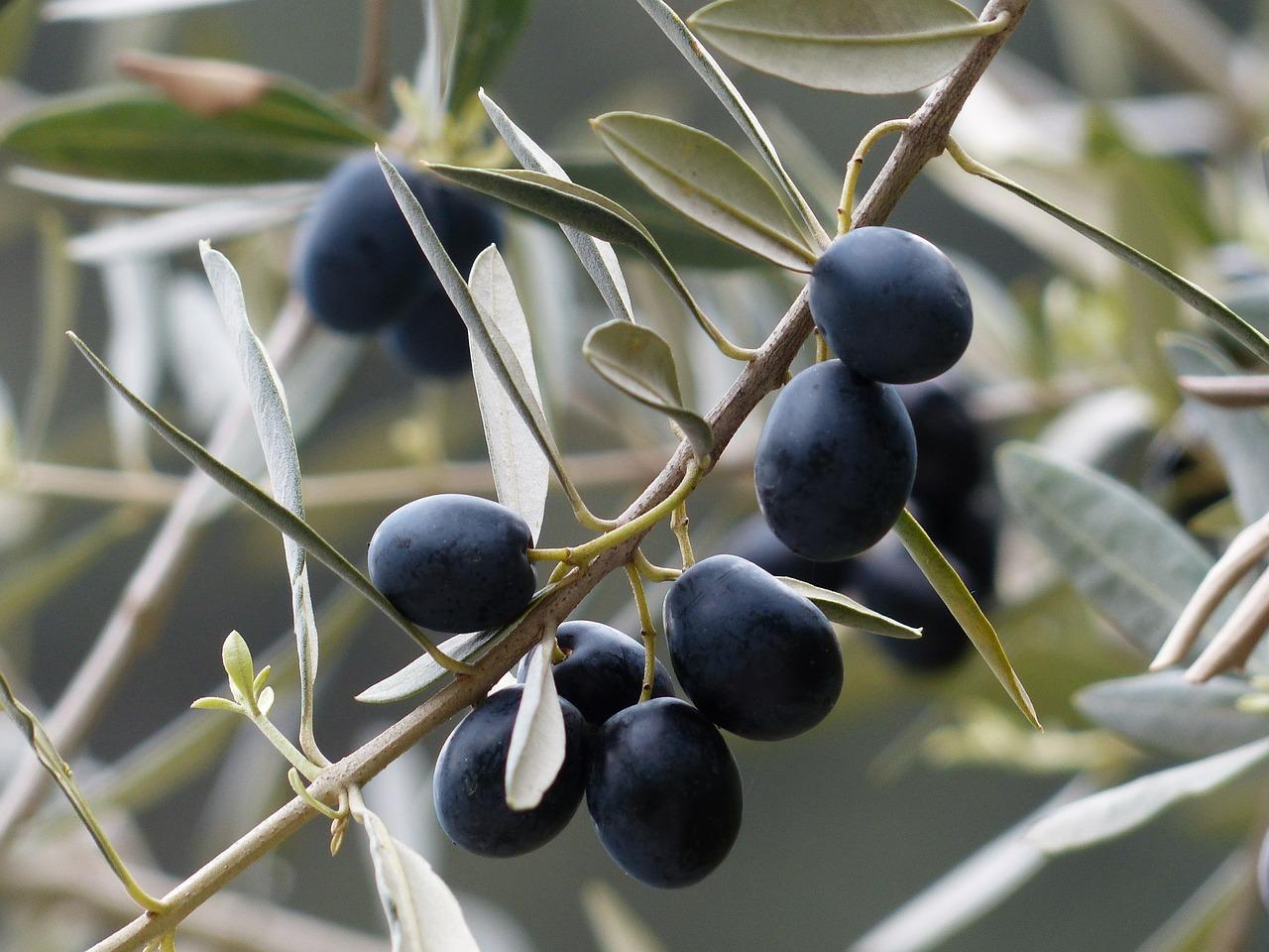 Spotlight on Olives: Greek Salad
