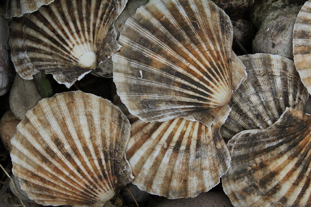 Spotlight on Seafood: Bay Scallop Chowder